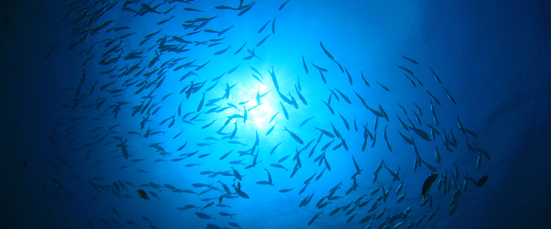 Tuna shoals-sustainable fishing