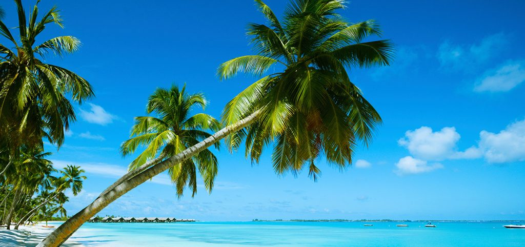Palm tree, sea and beach of Mauritius - Sapmer in Mauritius