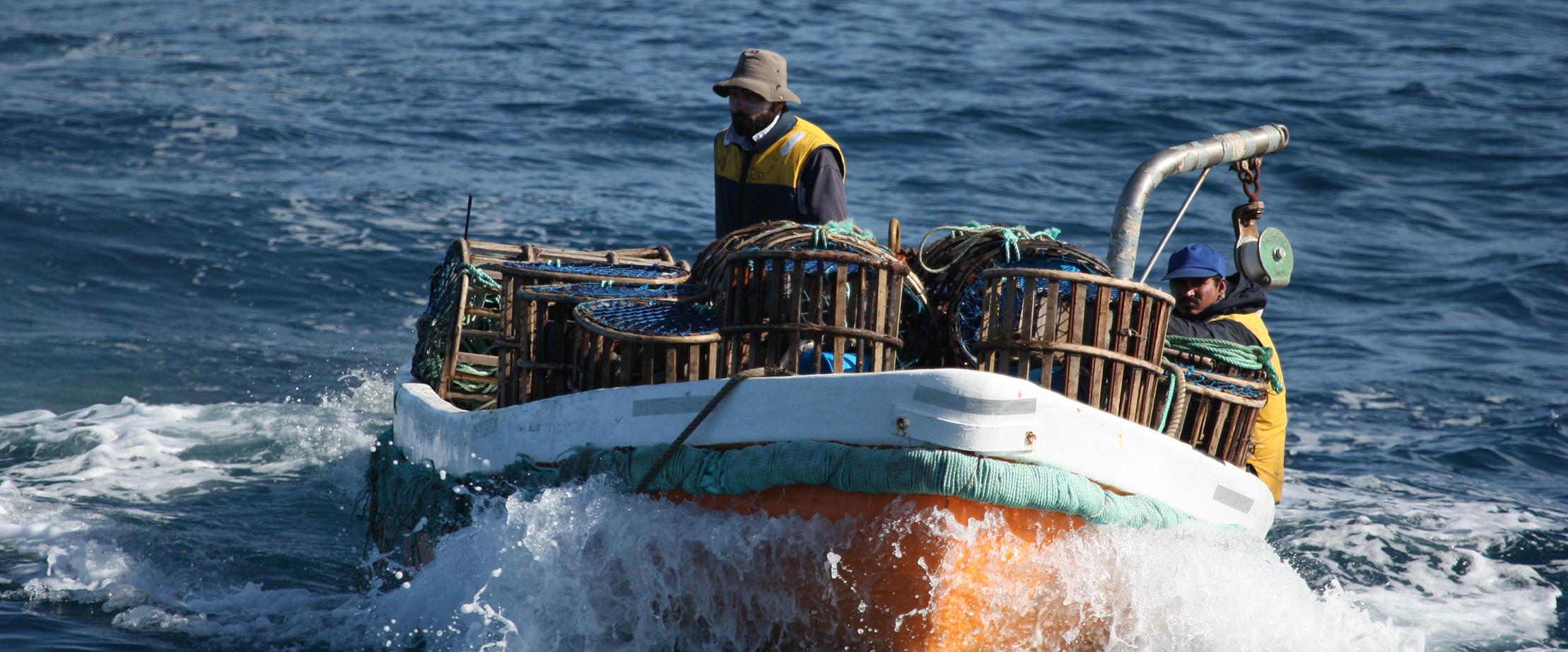 Sapmer rock lobster fishing