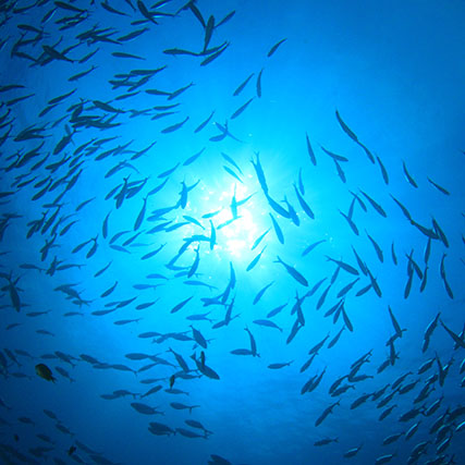 Marine resources management - Shoal of fish