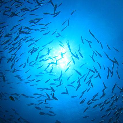Marine resources management - Shoal of fish